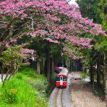 【阿里山】來到阿里山如何搭成小火車之鐵道攻略